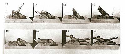 joe-spine-corrector